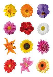Bilde av DECOR Stickers Aster mange i farger 3 ark (10